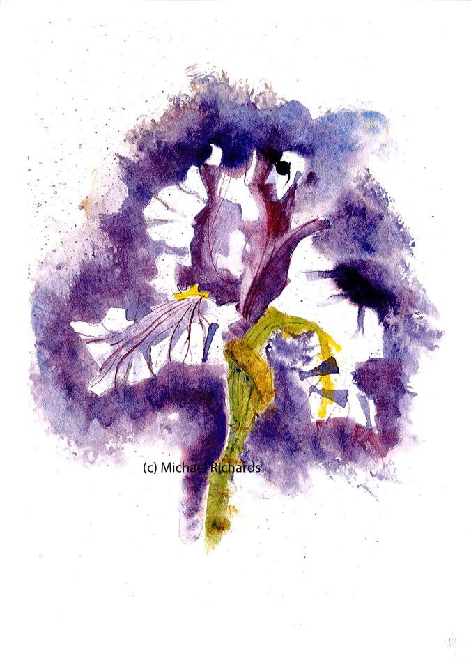 Iris blog